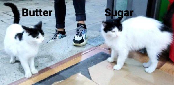 Butter &Sugar